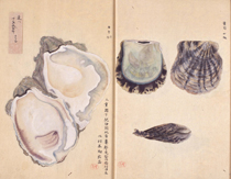 A work showing marine life submitted to the second National Industrial Exhibition (1881)