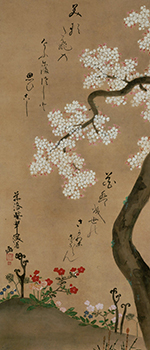Cherry Tree and Spring Plants