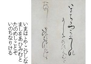 Masu shikishi