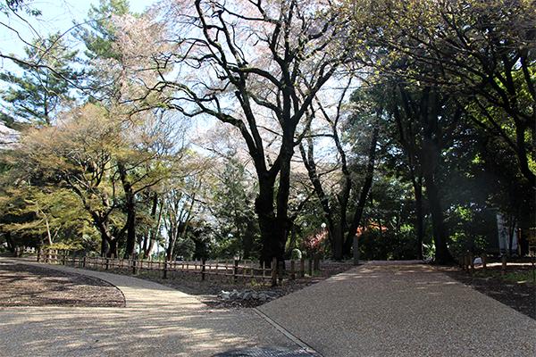 新しく舗装した園路の画像2